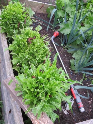 nacktschnecken-salat