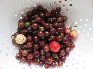 Stachelbeeren und Erdbeeren