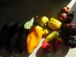 Gemüse frisch aus dem Folientunnel geerntet