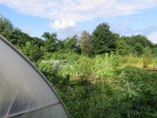 Hochbeetgarten vom Folientunnel aus