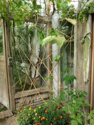 Bambusspalier im Gewächshaus
