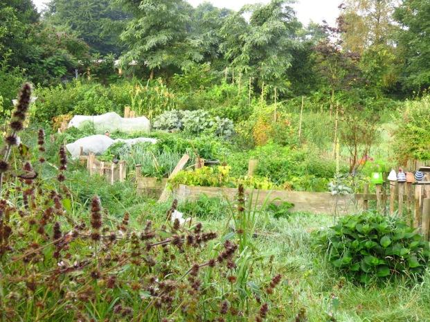 Blick auf den Hochbeetgarten durchs Unkraut