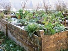 Wintergemüse auf dem Beet
