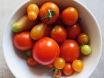 Die ersten bunten Tomaten in allen Formen