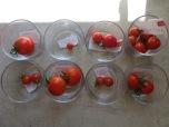 Verkostung der frühesten Tomaten