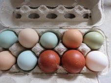 Das erste olive Ei