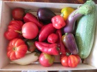 Paprika, Auberginen, Tomaten, Zucchini