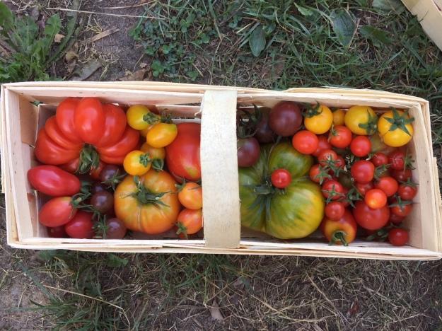 Tomatenvielfalt als Verkaufseinheit