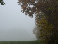 Nebel hängt über einem Feld