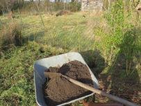 Korbweiden mit knallgelbem Austrieb pflanzen