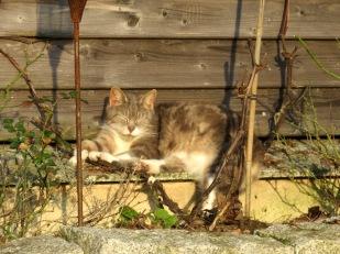 Auch Katze wärmt sich ihre alten Knochen