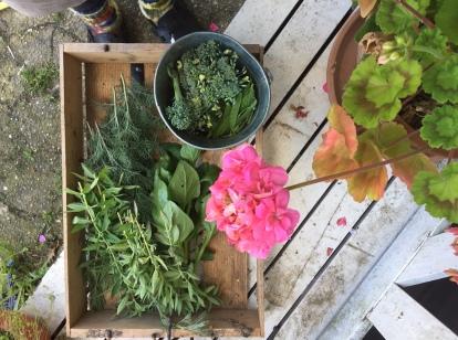 Broccoli, Zuckerschoten, Estragon, Neuseeländer Spinat, Eberraute