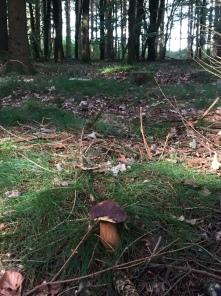 Wald. Pilz.