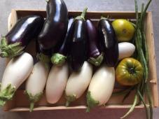 Auberginen schwarz-weiß