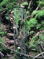 Magischer Baumstumpf