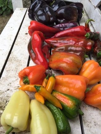 Regenbogen voll Paprika