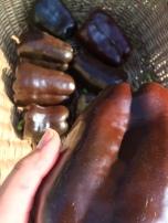 Braune Paprika 'Karamell'
